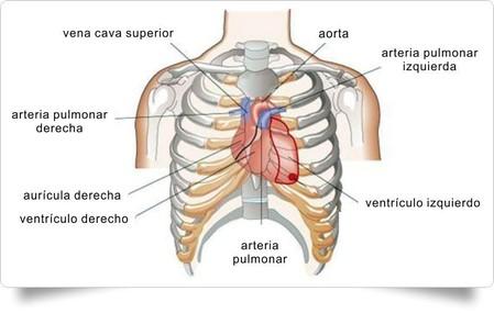 computacion apliada a la radiologia: anatomía radiológica tórax ...
