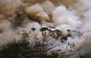 deforestacion 1