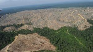 deforestacion 7