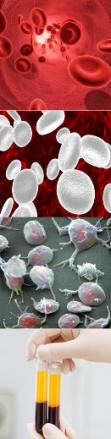 sangrecomponentes.png